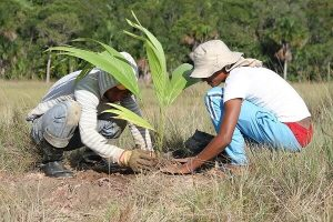 Planting native trees in the Amazon
